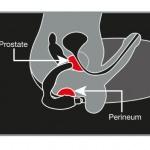 Vergleichstest: Prostata Vibratoren